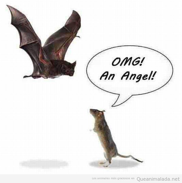 Dibujo gracioso de una rata que cree que un murciélago es un ángel