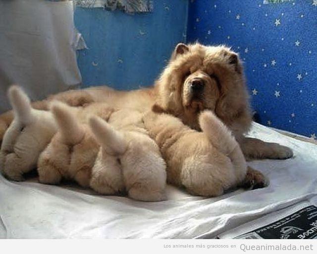 Foto tierna de cachorros de perro mamando