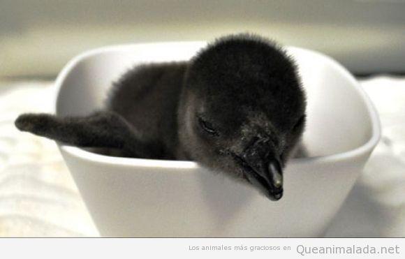 Foto tierna y bonita de un pingüino bebé