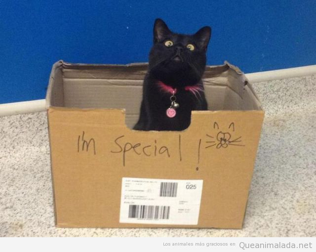 Foto divertida de un gato en una caja que pone i'm special