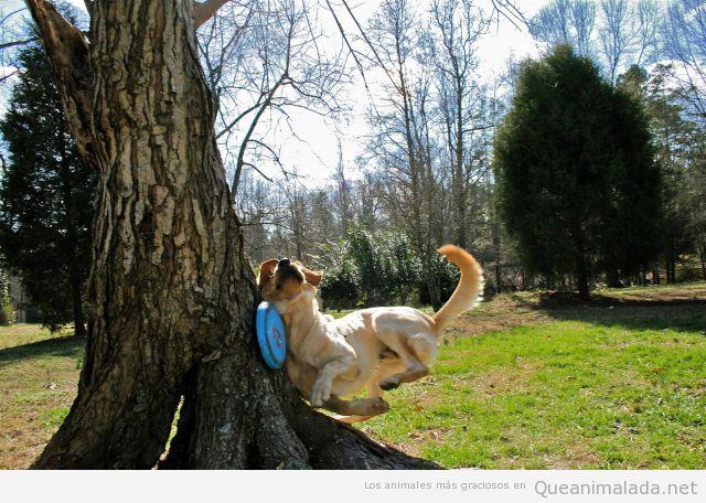 Foto graciosa de un fail de un perro al atrapar un frisbee