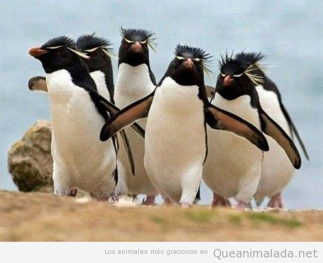 Foto graciosa de una pandilla de pinguinos chicos malos