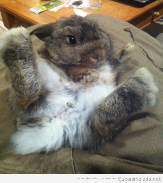 Foto divertida de un conejo con las patas arriba