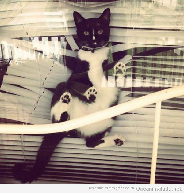 Foto divertida de un gato que ha destrozado una persiana