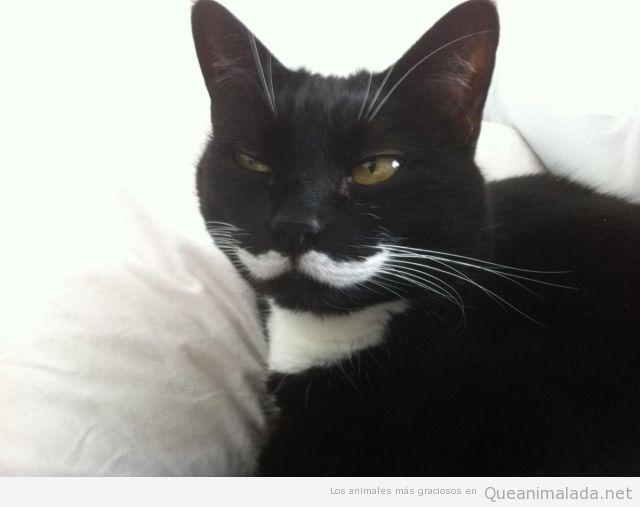 Foto curiosa de un gato negro con un bigote blanco