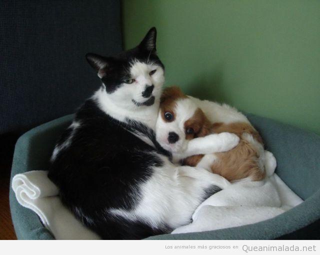 Imagen divertida de un gato abrazando a un perro