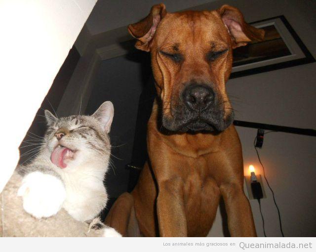 Imagen divertida de un gato burlándose de un perro con cara triste