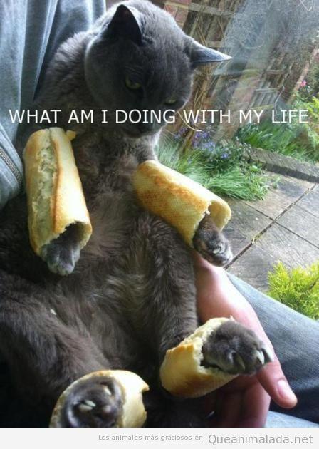 Foto divertida de un gato con las patas metidas en barras de pan