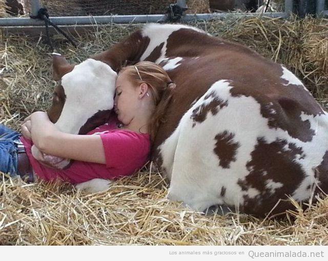 Chica durmiendo la siesta tumbada con una vaca