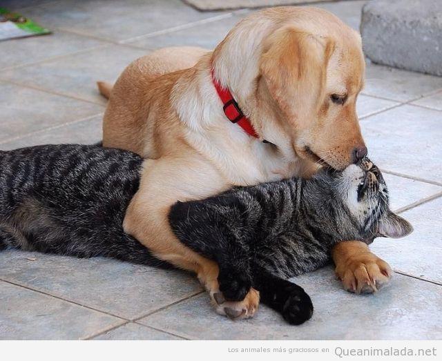 Foto bonita y tierna de un perro abrazando y dando un beso a un gato