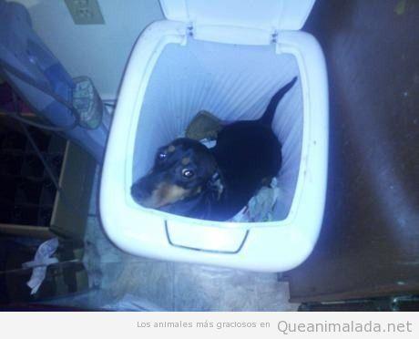 Foto graciosa de un perro metido en el cubo de la basura