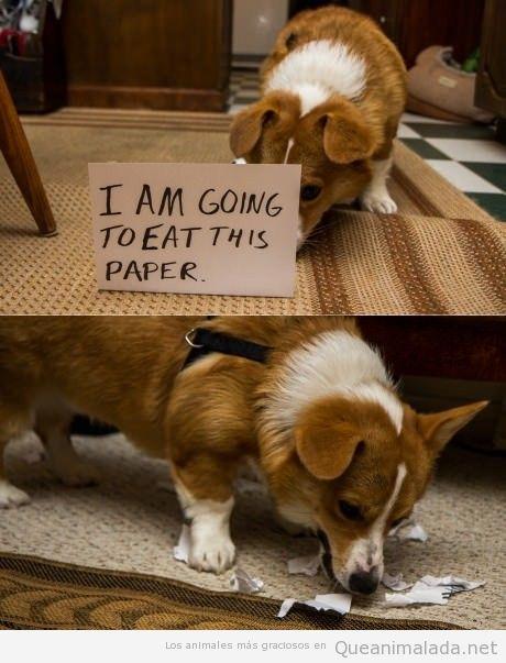 Foto divertida de un perro que se come un papel