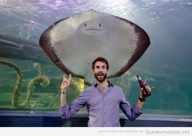 Pez Manta jodefotos en u Aquarium