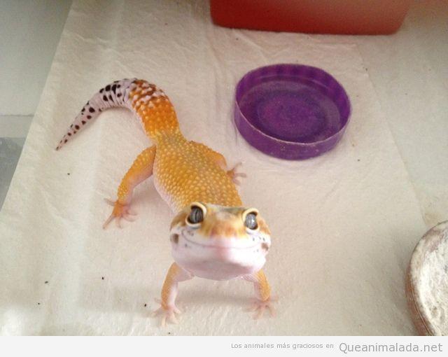 Foto graciosa de un gecko sonriendo