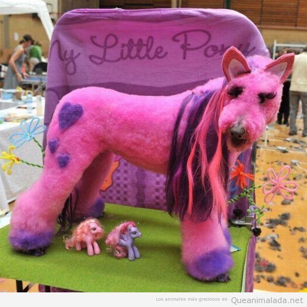 Perro disfrazado y con el pelo teñido parece little pony