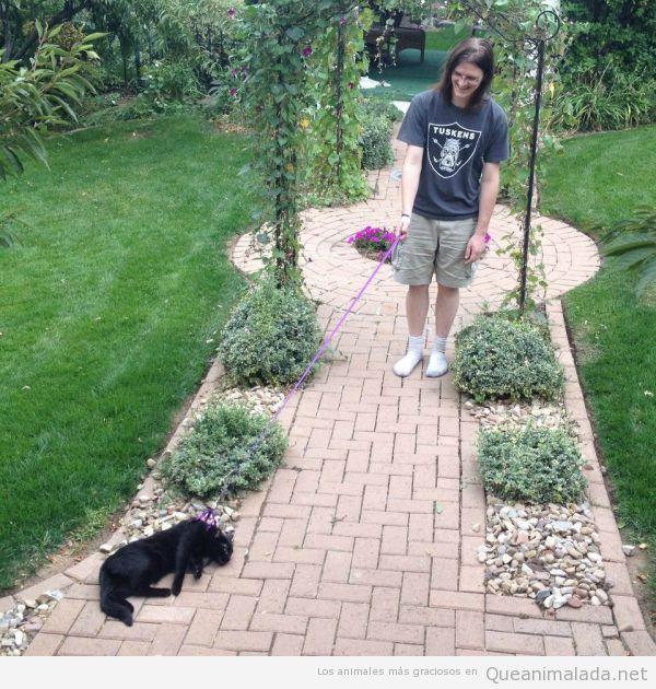 Foto divertida de un chico intentando pasear a su gato dormido por el jardín