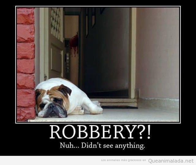 Foto graciosa de un bulldog vago en la puerta de casa