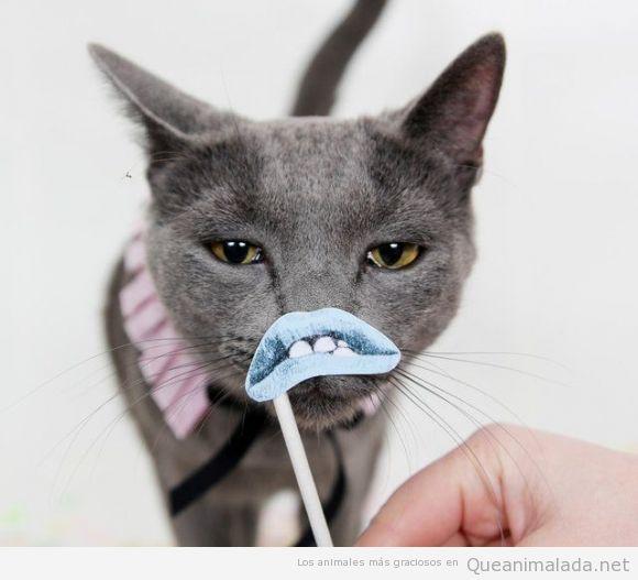 Foto de un gato con cara de pocos amigos