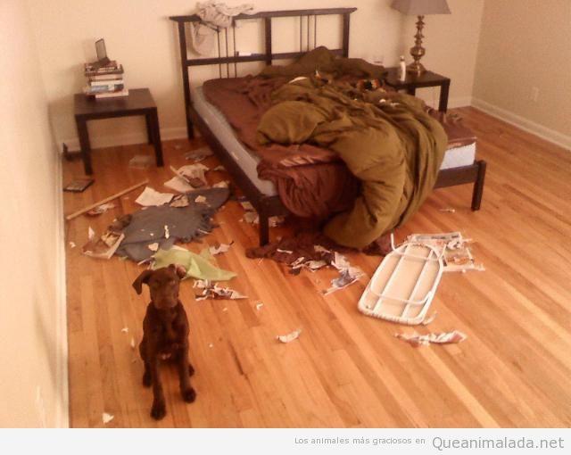 Foto de un perro que ha destrozado habitación matrimonio