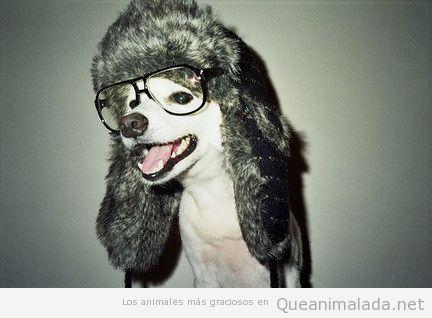 Perro gracioso con gorro de pelos y gafas, parecido a Mario Vaquerizo