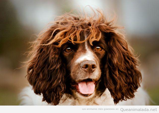 Perro de pelo largo con un parecido razonable a Carles Puyol