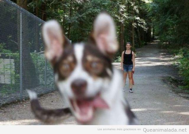 Foto graciosa de un perro fastidiando la foto