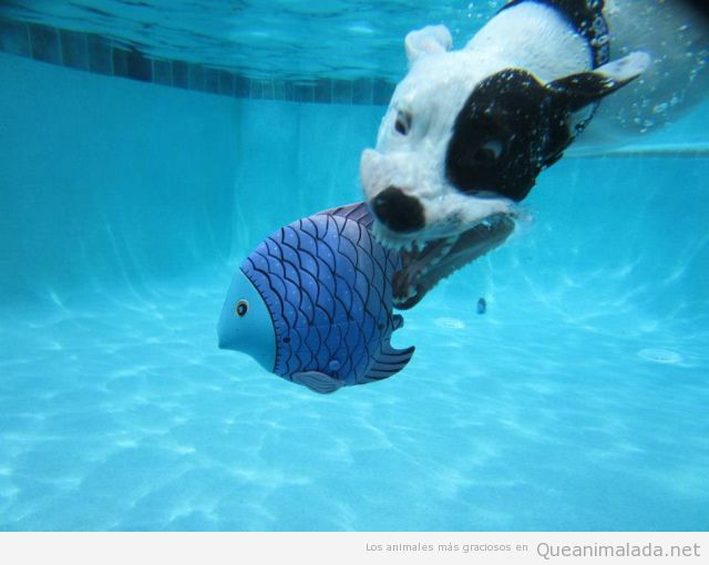 Menos mal que el pez era de peluche for Piscina para perro