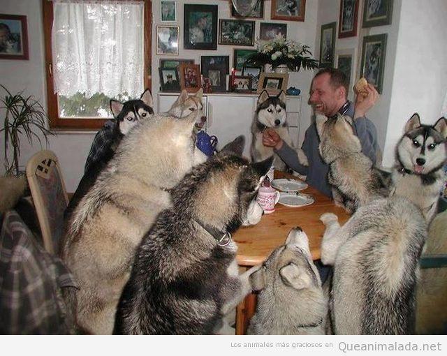 Perros en la mesa
