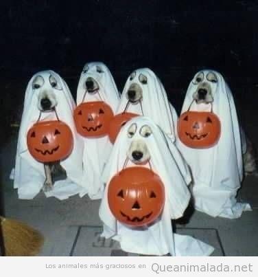 Perros con disfraz de fantasma en Halloween