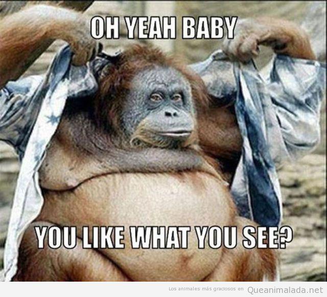 Orangután hembra enseñando pechos