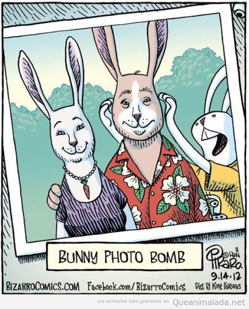 Comic de un conejo fastidiando la foto