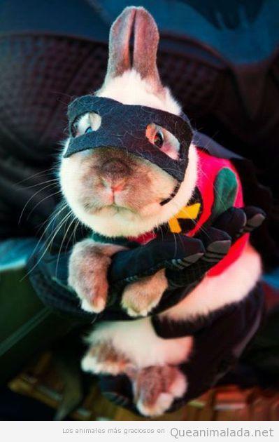 Conejo disfrazado de Robin de Batman