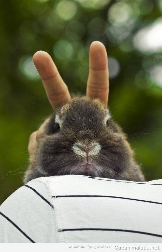 Foto graciosa poner cuernos a un conejo