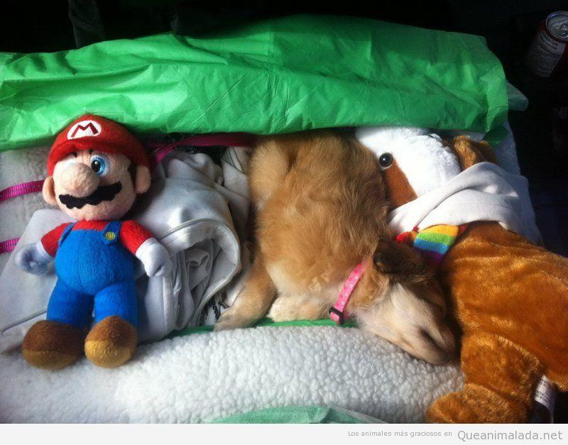Foto graciosa de un perro entre peluches