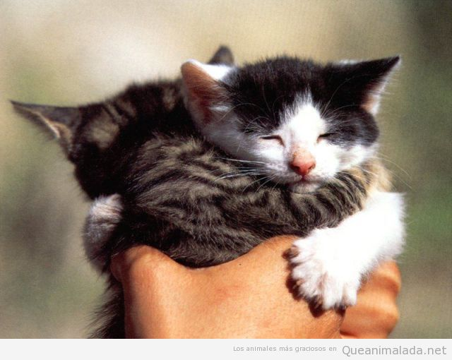 Foto tierna y bonita de dos crías de gato abrazándose