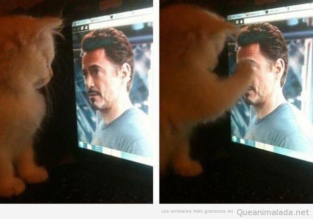 Foto graciosa de un gato tocando a Robert J Downey