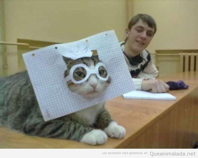 Imagen chistosa de gato con gafas de papel