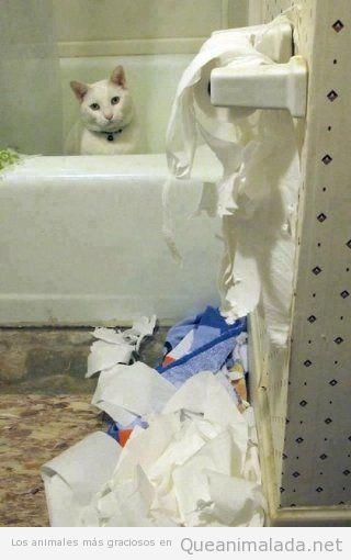 Imagen divertida de un gato que destroza papel wc