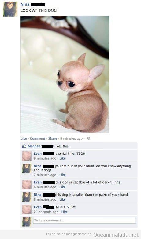 Imagen graciosa de un cachorro de chiuaua serial killer