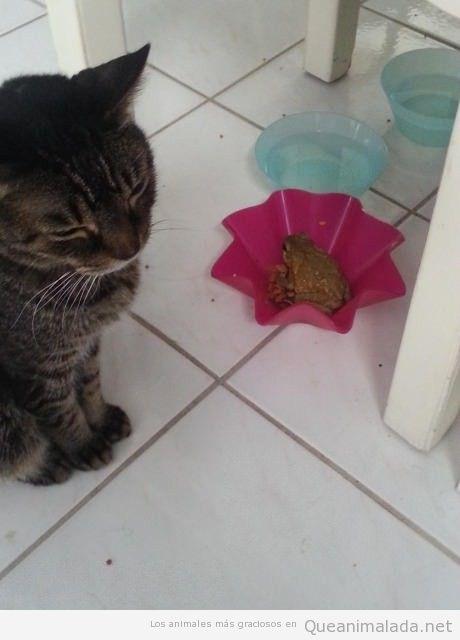 Foto graciosa de una rana en un bowl de un gato