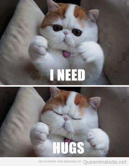 Meme bonito y tierno de un gatito que necesita abrazos