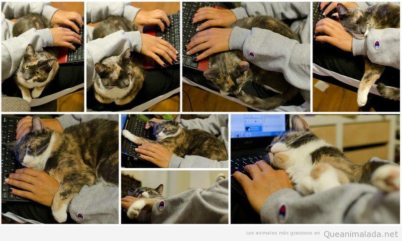 Fotos graciosas gatos en medio del ordenador y tu