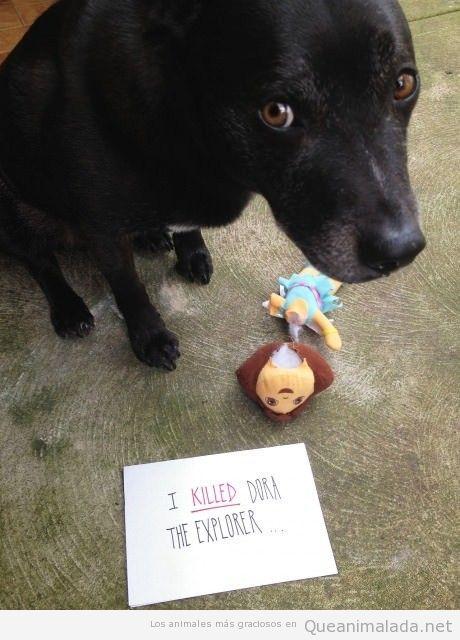 Imágenes graciosas de un perro que mató a Dora la Exploradora