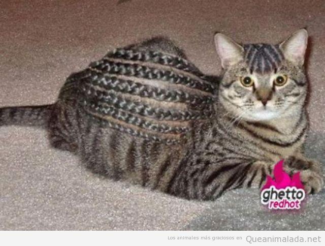 Gato gracioso con el pelo lleno de trenzas