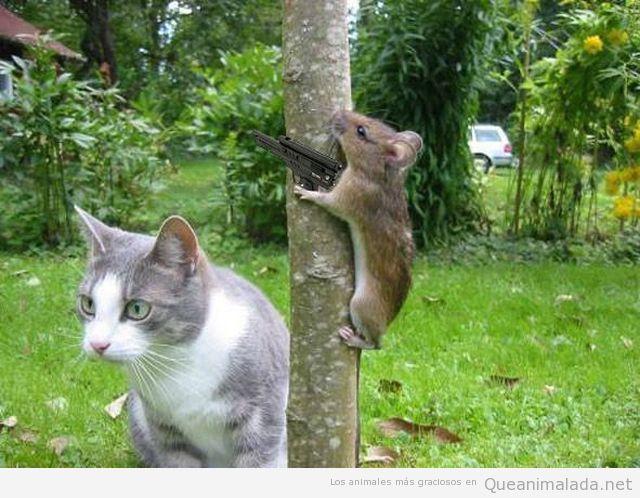 Hamster con pistola al lado de un gato