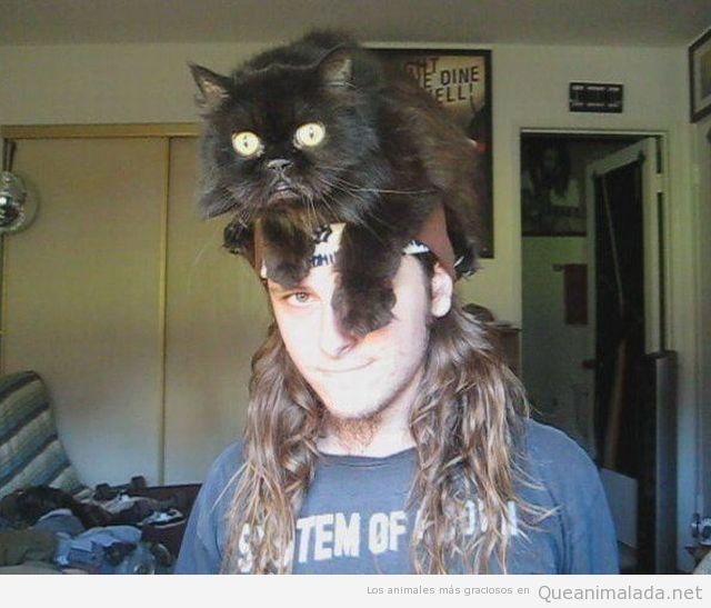 Chico con un gato en la cabeza como sombrero