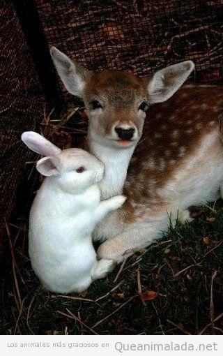 Imagen preciosa de ciervo y conejo