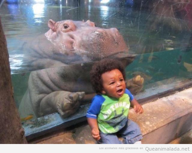 Foto graciosa de niño pequeño con hipopótamo