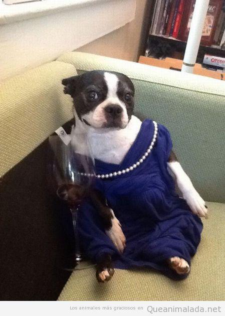 Perro disfrazado de señorita con copa de vino