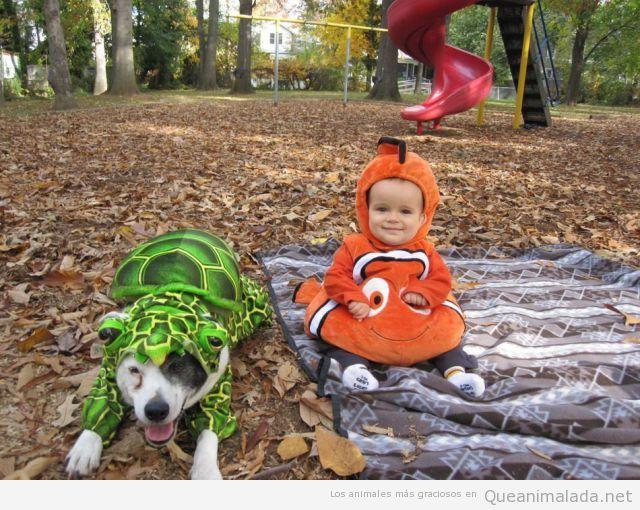 Perro disfrazado de tortuga y un bebé de Nemo